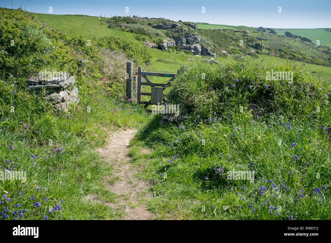 Sentier du littoral au printemps sur les Bolberry spectaculaire vers le bas, dans le sud du Devon, UK Photo Stock