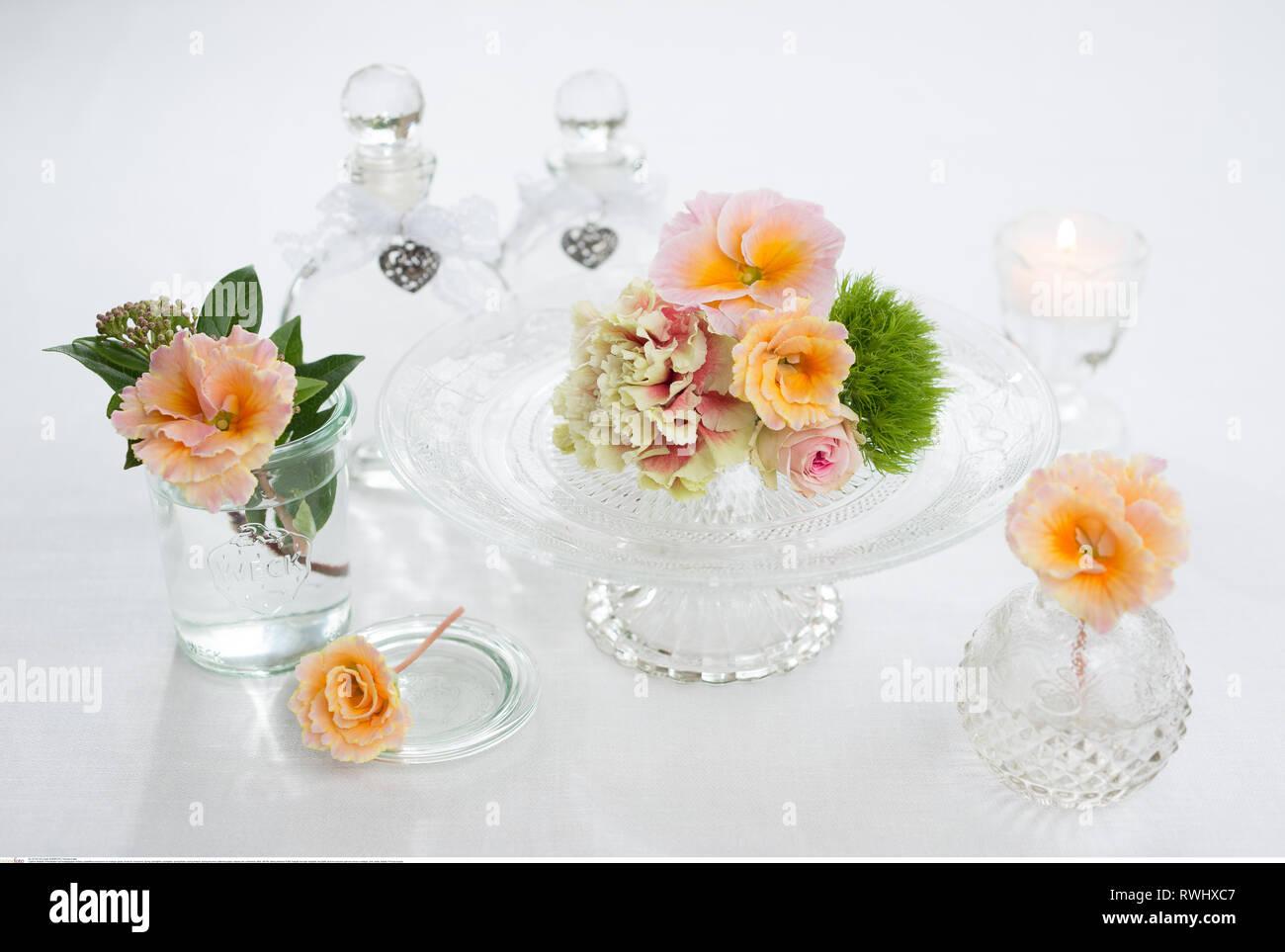 La botanique, l'polyanthrus fleurs sur gl nostalgique, attention! Pour Greetingcard-Use Postcard-Use / dans la partie germanophone du pays, certaines restrictions peuvent s'appliquer Photo Stock