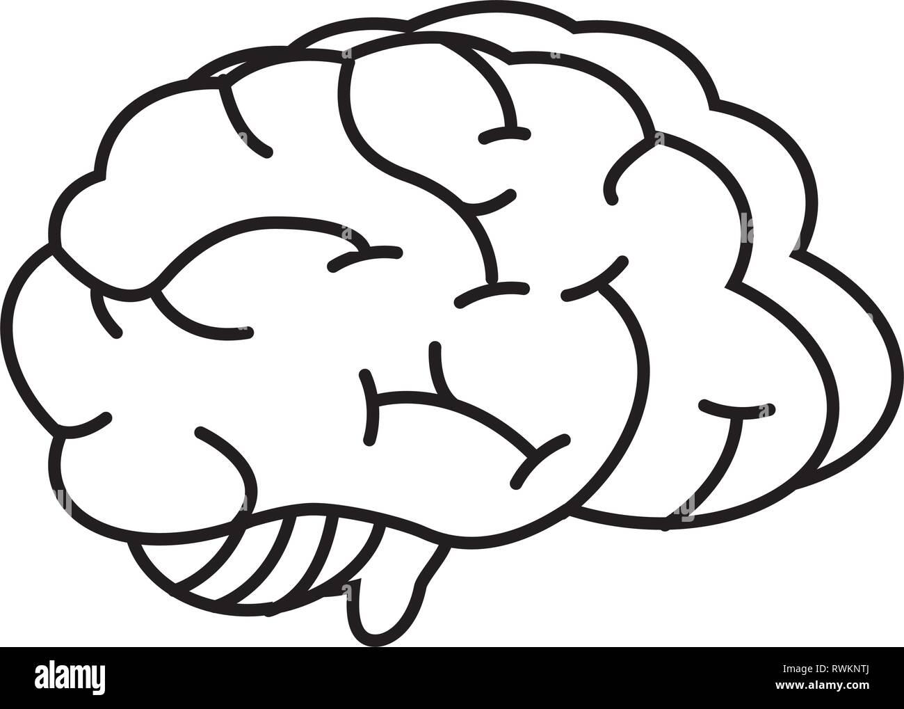 Organe du cerveau humain Photo Stock
