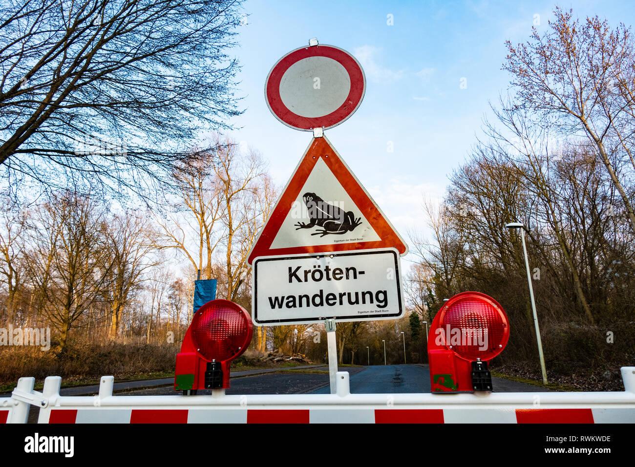 Allemagne, Bonn, au printemps, certaines routes sont fermées pour trafic pour permettre aux crapauds à traverser en toute sécurité sur le chemin de la proximité de lacs Photo Stock