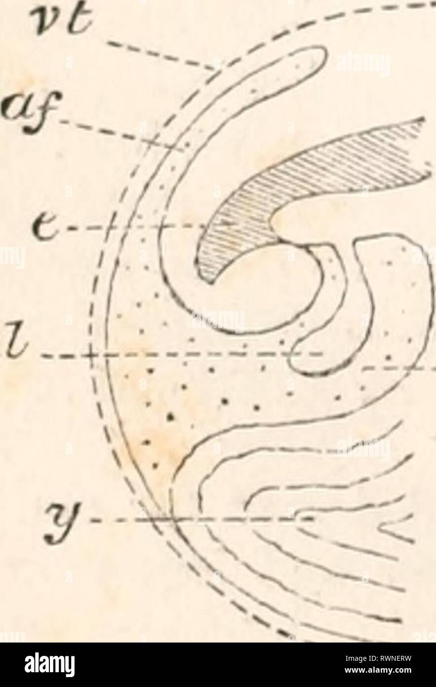 Les éléments d'embryologie (1874) Les éléments d'embryologie humaine elementsofembryo01fost Année: 1874 g al-i: - j?p JBP AC-4U-J al-.-'&Lt; Photo Stock