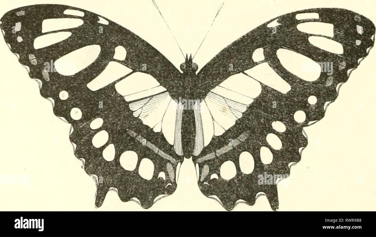 Encyclopédie d'histoire naturelle; ou, traité Encyclopédie d'histoire naturelle; ou, traité complet de cette science d'après les travaux des naturalistes les plus éminents de tous les pays et de toutes les époques: Buffon, Daubenton, Lacépède, G. Cuvier, F. Cuvier, Geoffroy Saint-Hilaire, Latreille, de Jussieu, Brongniart, etc encyclopdiedhi09chens Année: [186-?-187-?] 126 HISTOIRE NATURELLE. Fylindriques Chenilles, munies de deux longues cornes sur la léte, et de qualie épines verticales sur la partie dorsale. Chrysalides présentant des prolongements filiformes sur les cÃ'tés de la Photo Stock