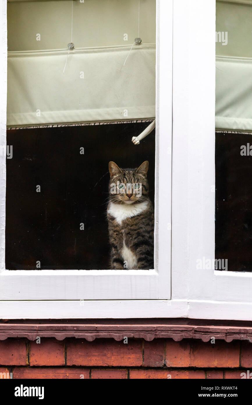 chaud humide noir chatte photos grosse chatte vidéo Téléchargement gratuit
