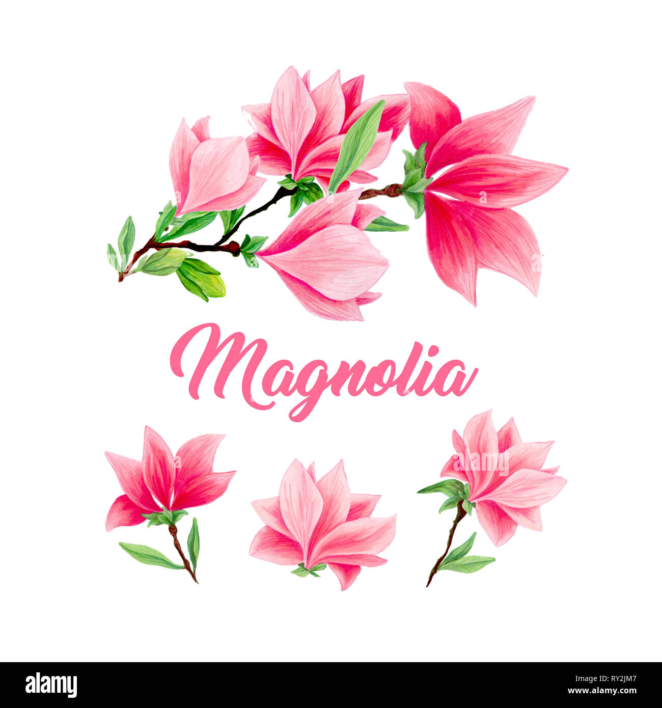 Bouquet de fleurs de Magnolia en fleurs, belle maison et ...