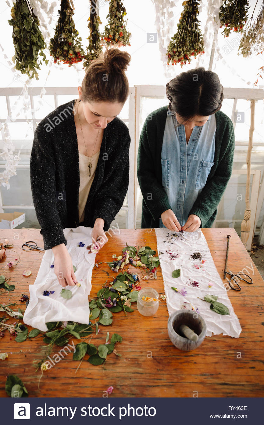 Les femmes fleurs de séchage pour la fabrication du papier Photo Stock