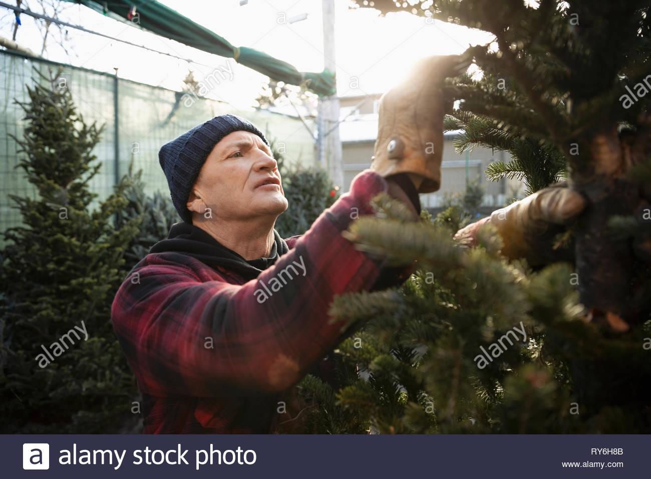 Contrôle des travailleurs sur les branches de l'arbre de Noël au marché de Noël Photo Stock
