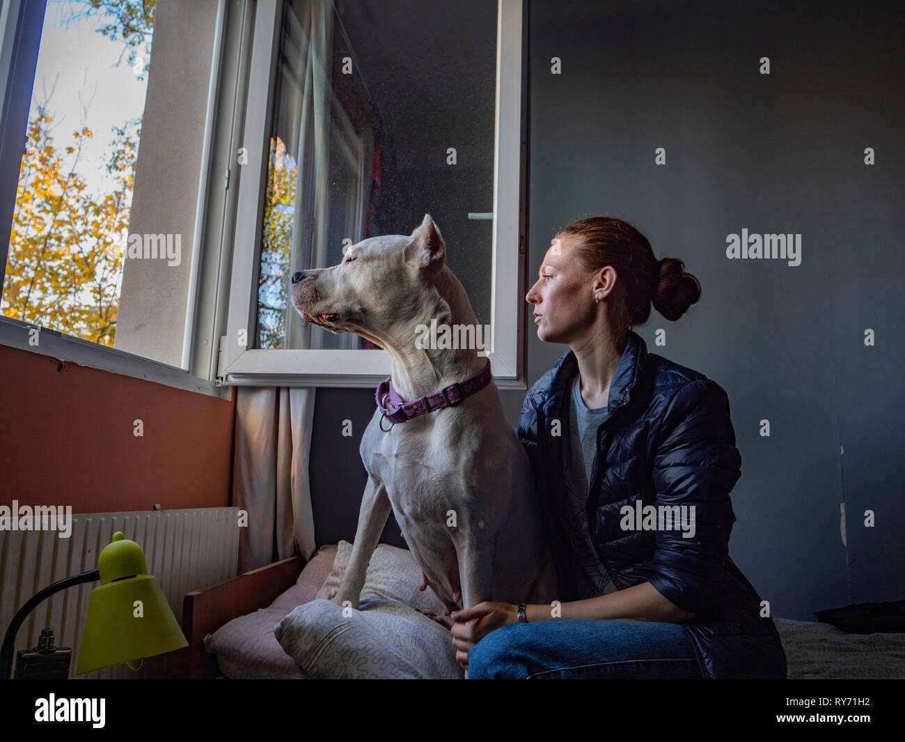Femme avec grand danois à la fenêtre par while sitting on bed at home Banque D'Images