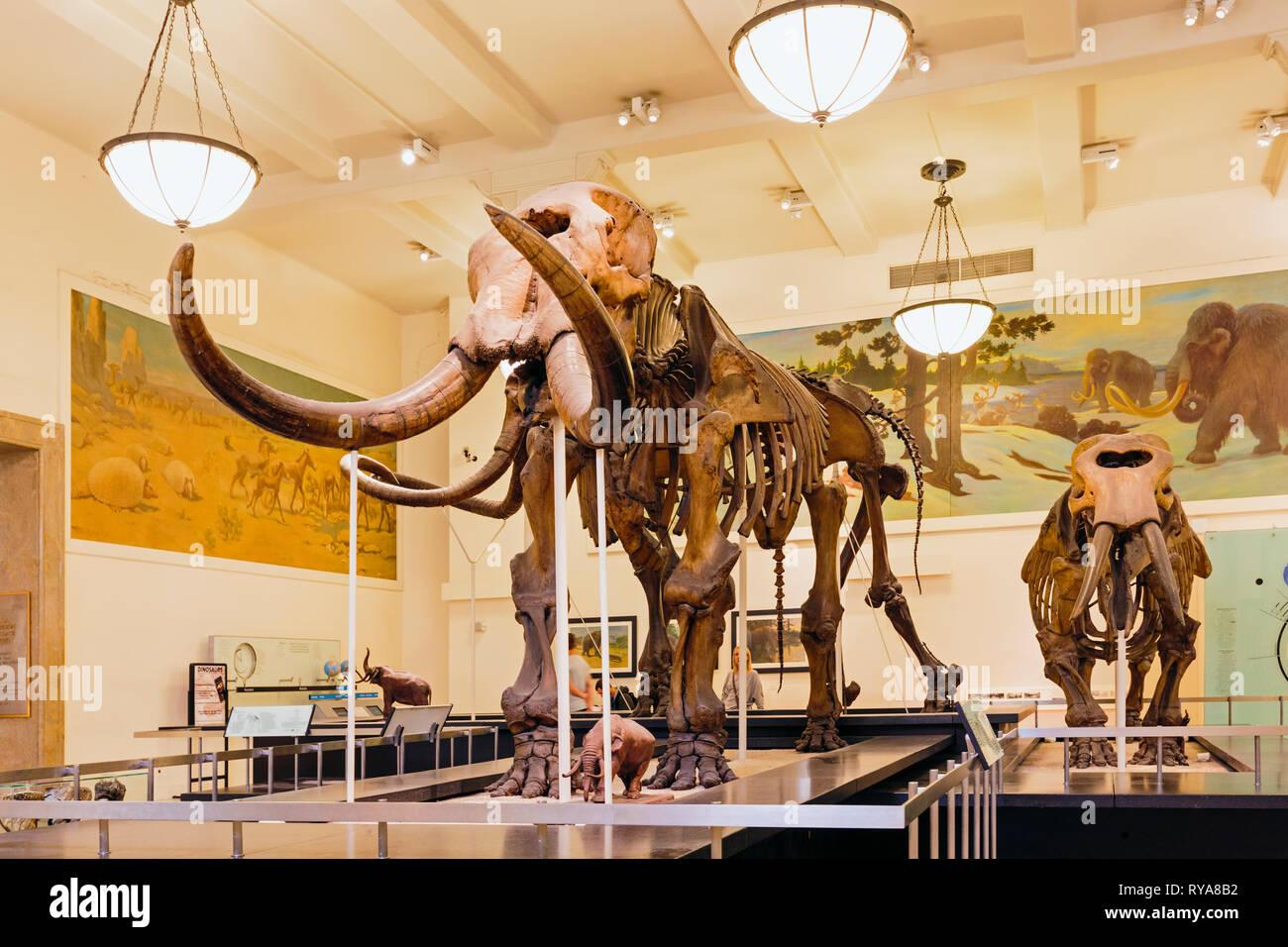 Squelette d'un mammouth, le Musée Américain d'Histoire Naturelle. La ville de New York, État de New York, États-Unis d'Amérique. Photo Stock