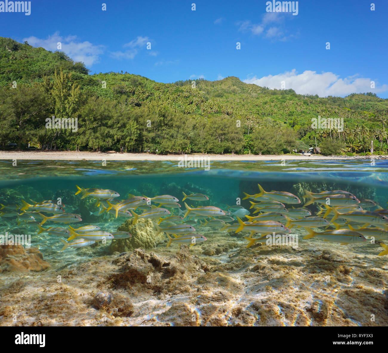 L'île de Rurutu, Polynésie française côte luxuriante avec un banc de poissons sous l'eau, sud pacifique, l'archipel Austral, fractionnée Photo Stock