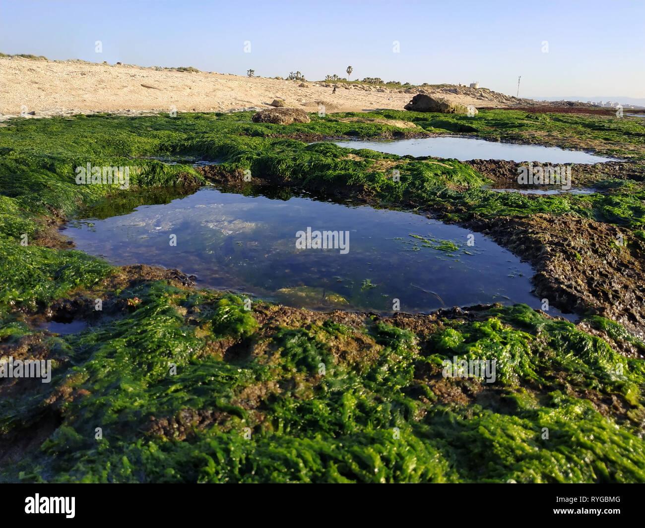 Bustan HaGalil plage de sable avec des rochers près d'Acre Haïfa Israël. Akko mer méditerranée. L'eau claire avec des pierres couvertes d'algues. Sunny blue sky Banque D'Images