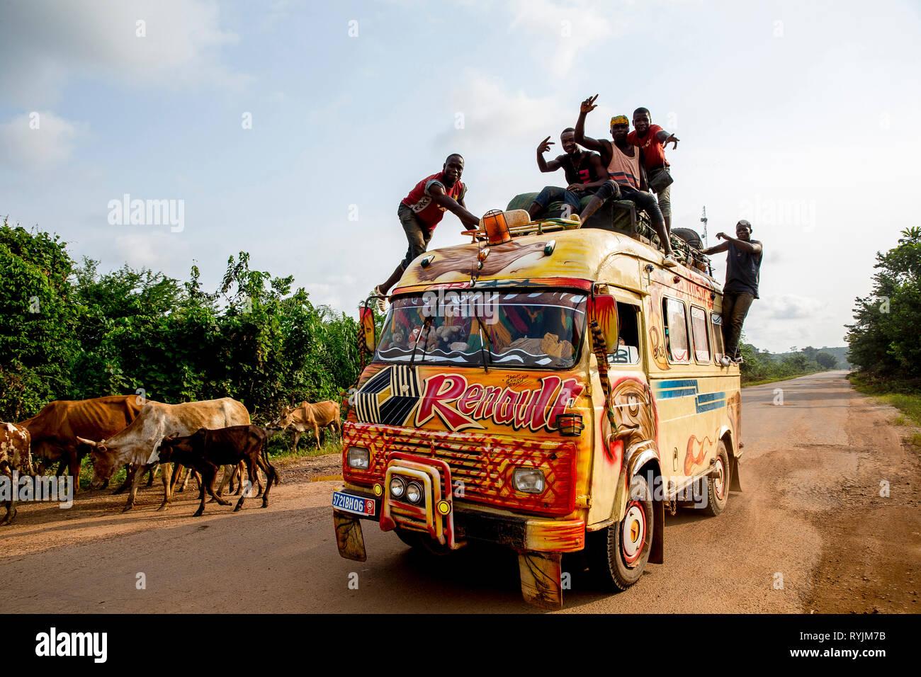 Le bétail et les transports publics bus près de Fresco, Côte d'Ivoire. Photo Stock