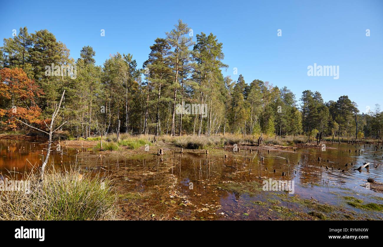 Paysage d'automne avec le lac de séchage dans une forêt. Banque D'Images