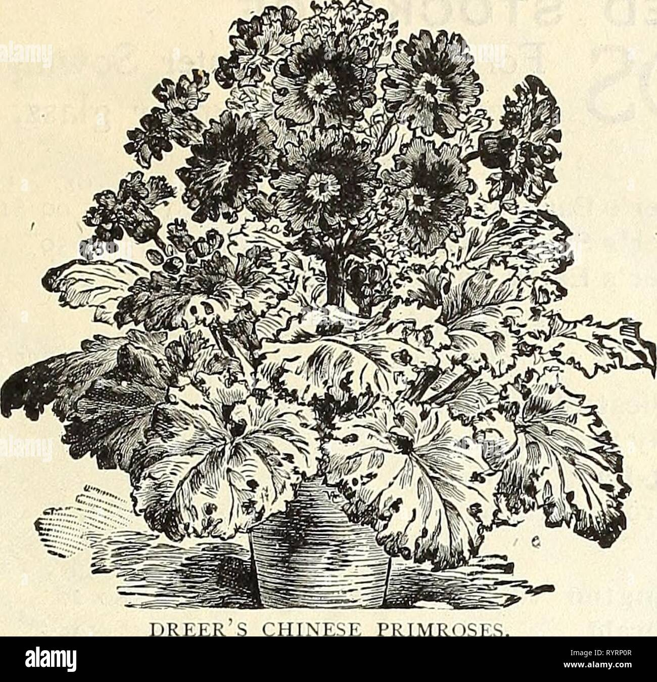 Coloriage Fleurs Bulbe.Prix De Gros Bulbes Dreer Dreer Prix De Gros Bulbes Plantes