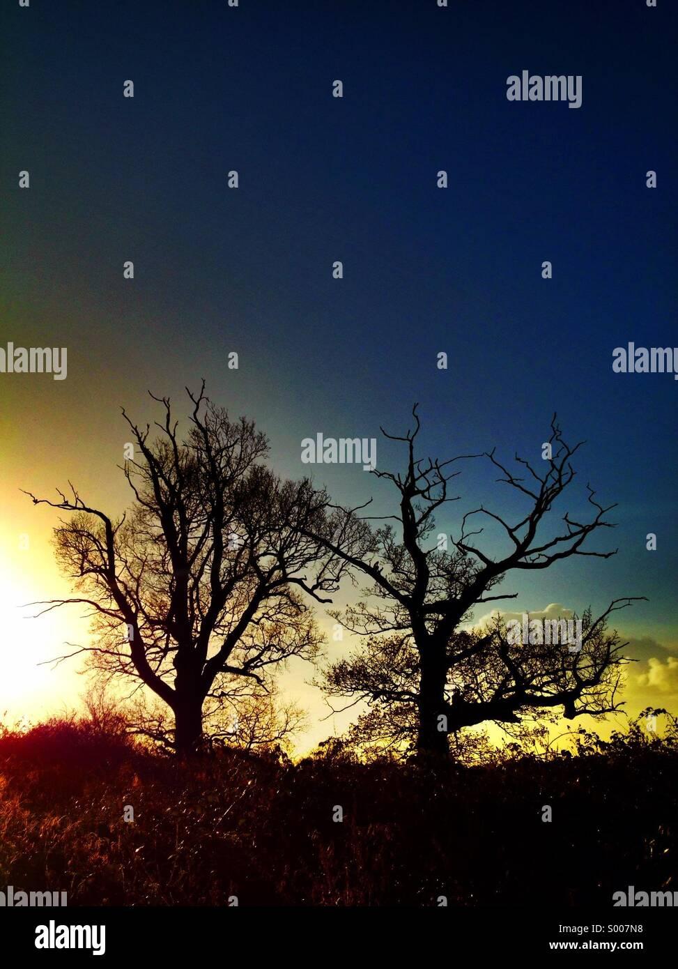 Deux arbres en silhouette contre un ciel de couleurs vives. Banque D'Images