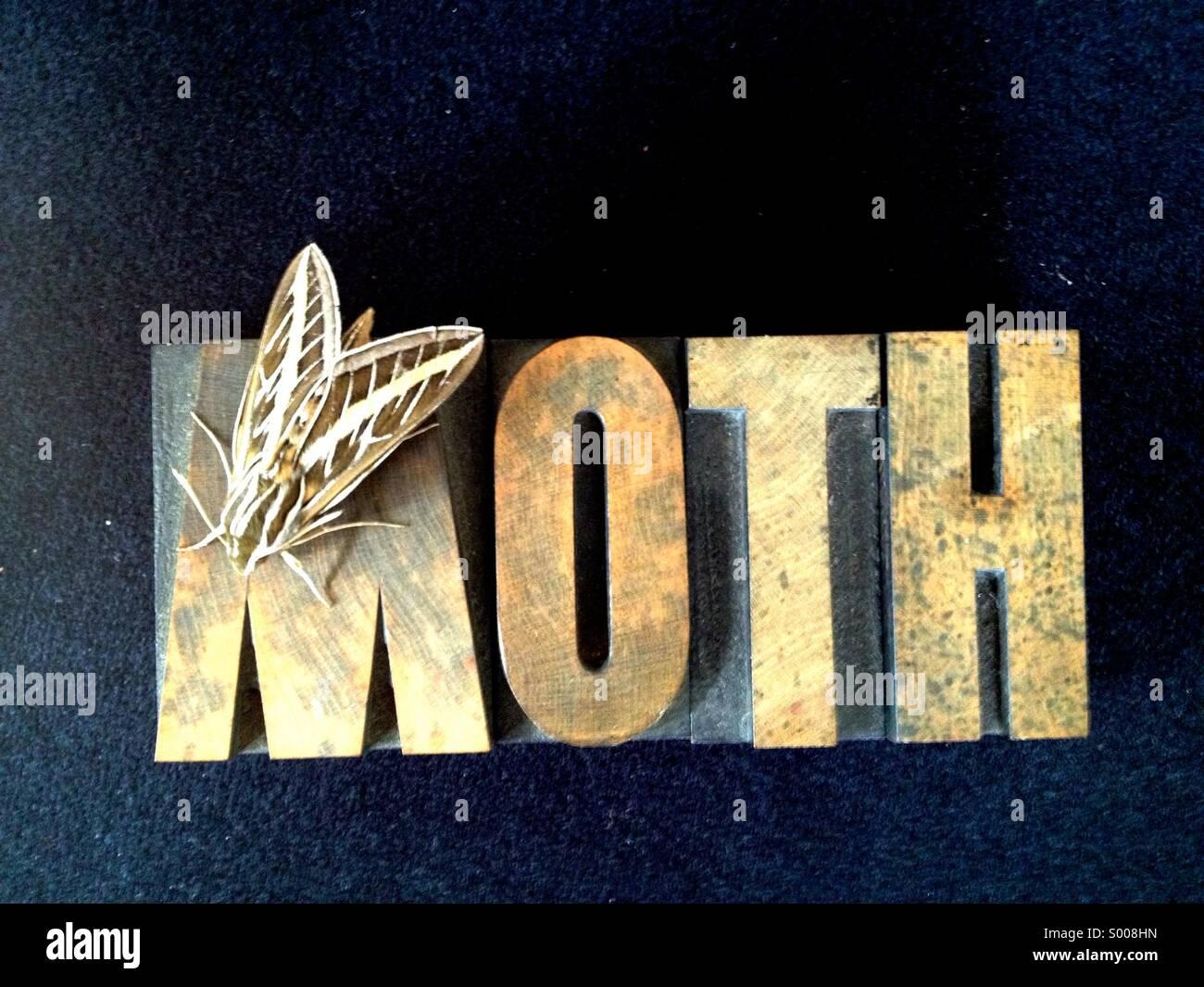 Vivre papillon sur word Photo Stock
