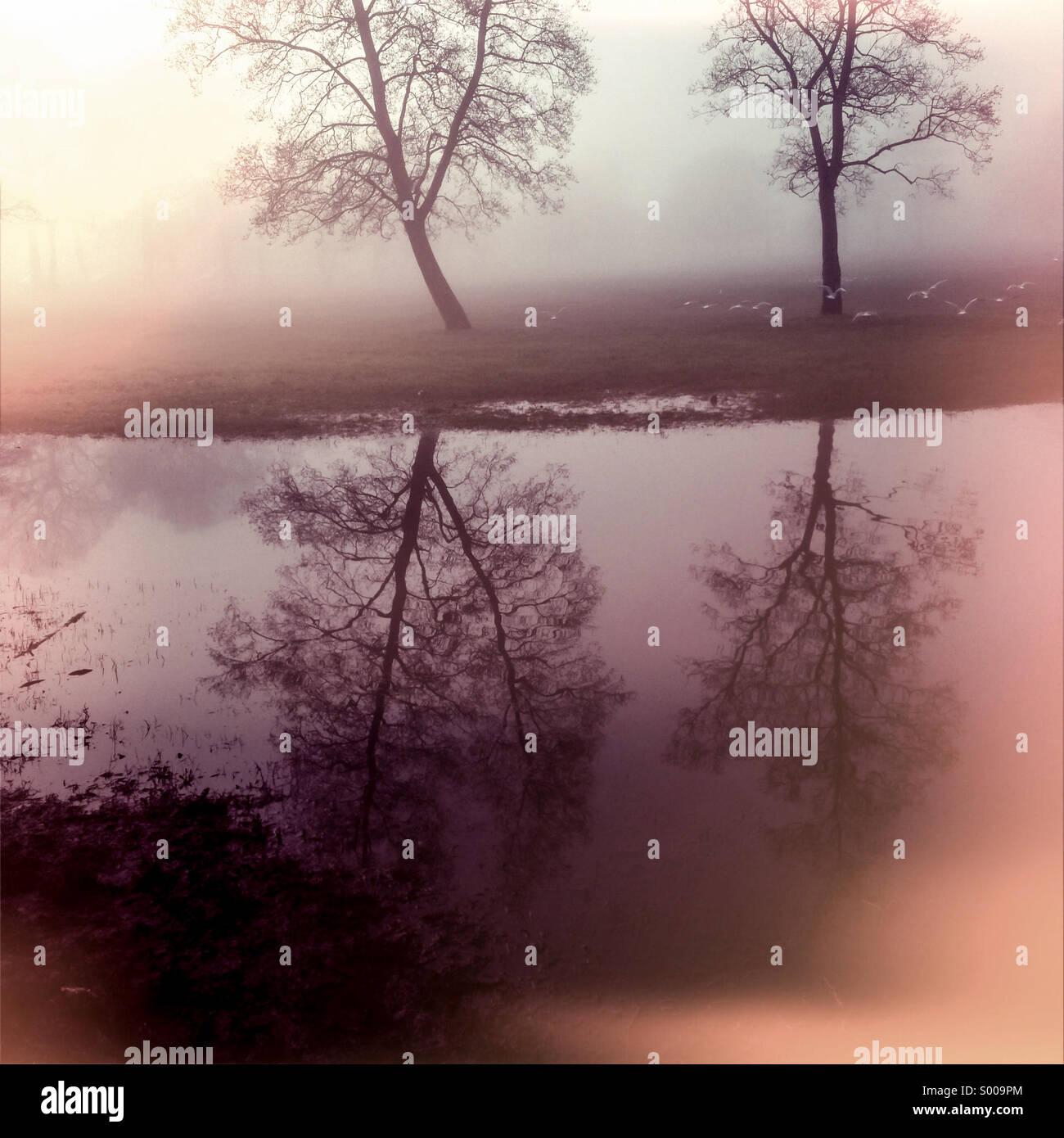 Arbres se reflétant dans le brouillard au petit matin Photo Stock