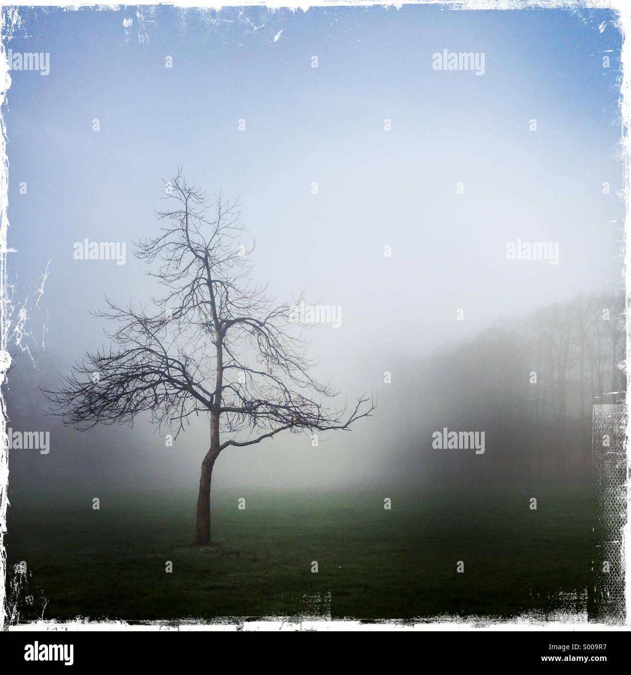 Arbre isolé dans le brouillard Photo Stock