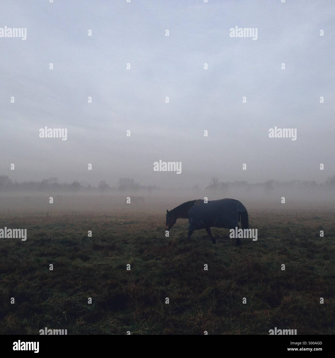 Cheval solitaire en manteau bleu sur un paysage sombre brouillard Photo Stock
