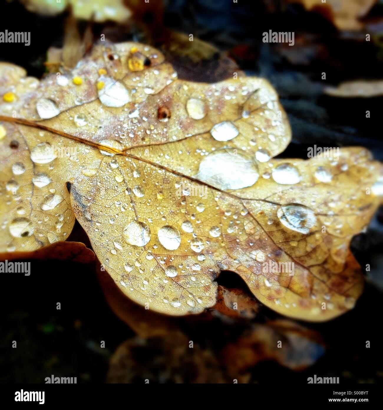 Gouttes d'eau sur leaf Photo Stock