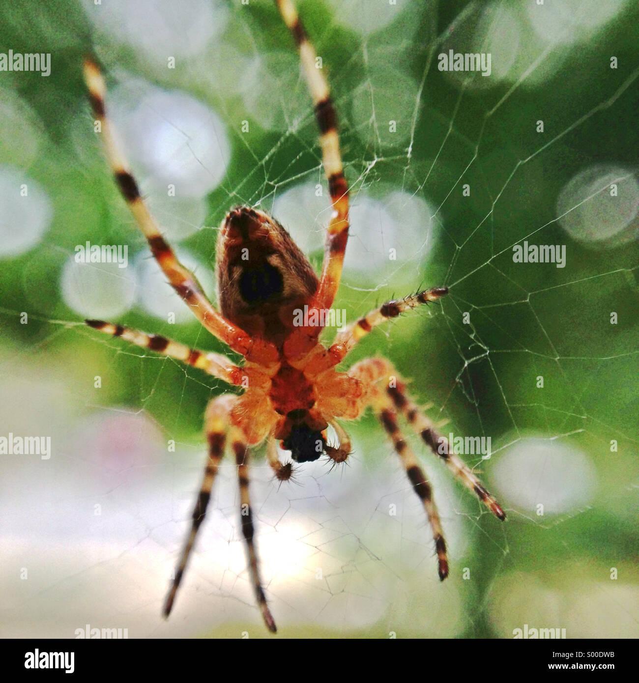 Faire un Spider web. Photo Stock