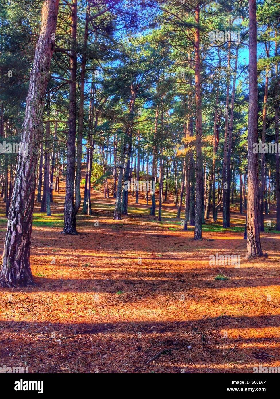 Terres boisées Photo Stock