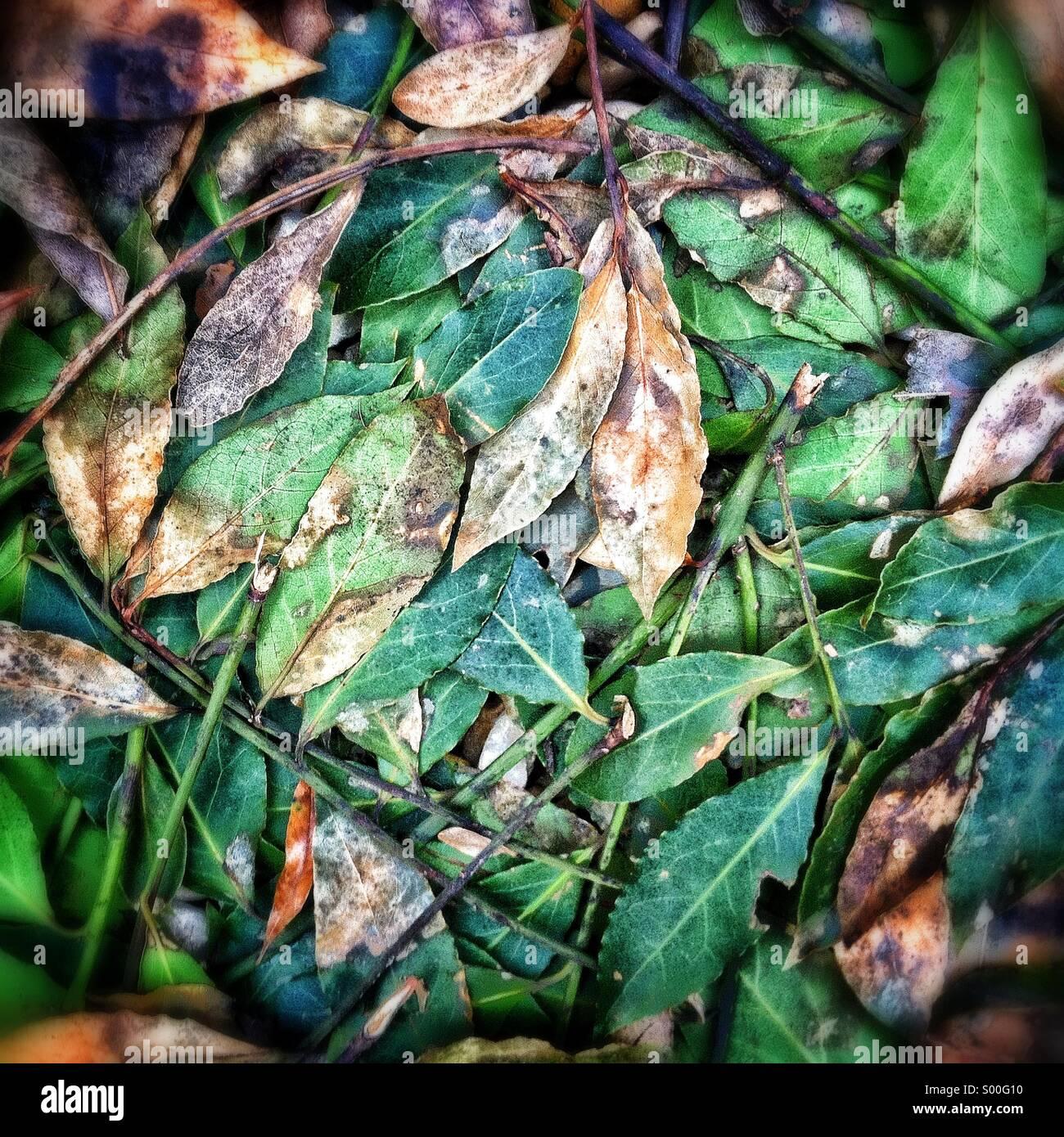 Les feuilles sur le terrain Photo Stock