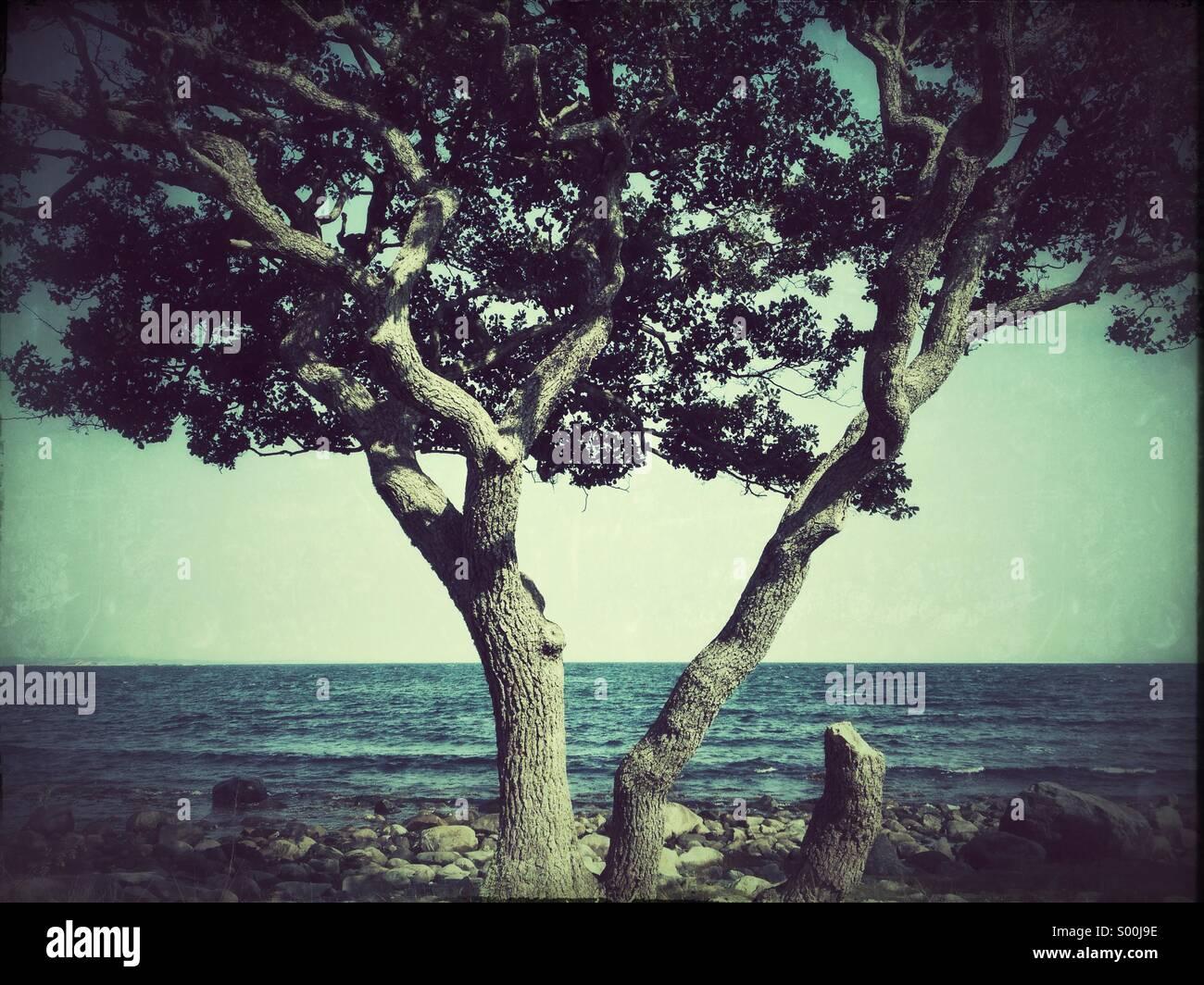 Grungy photo de Lone Tree on Rocky beach, Jomfruland, Norvège Photo Stock