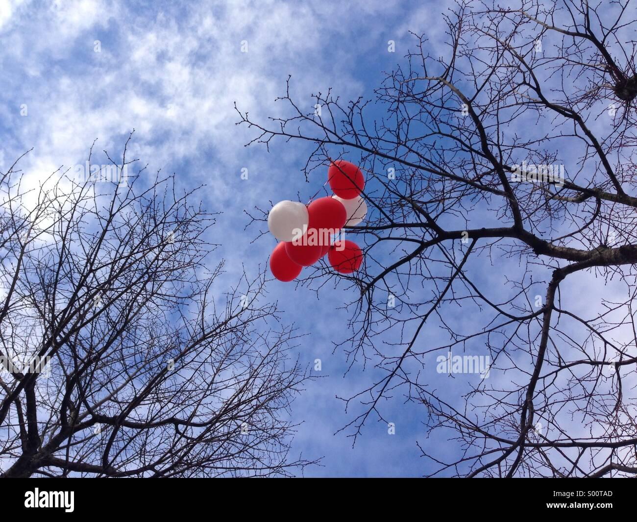 Ballons rouges et blancs pris dans les branches nues d'un arbre en hiver Photo Stock