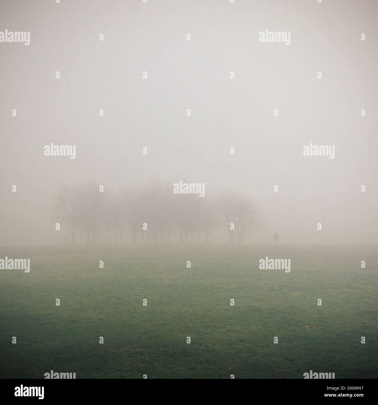 Matin brumeux obscurcir un bosquet d'arbres au loin Photo Stock