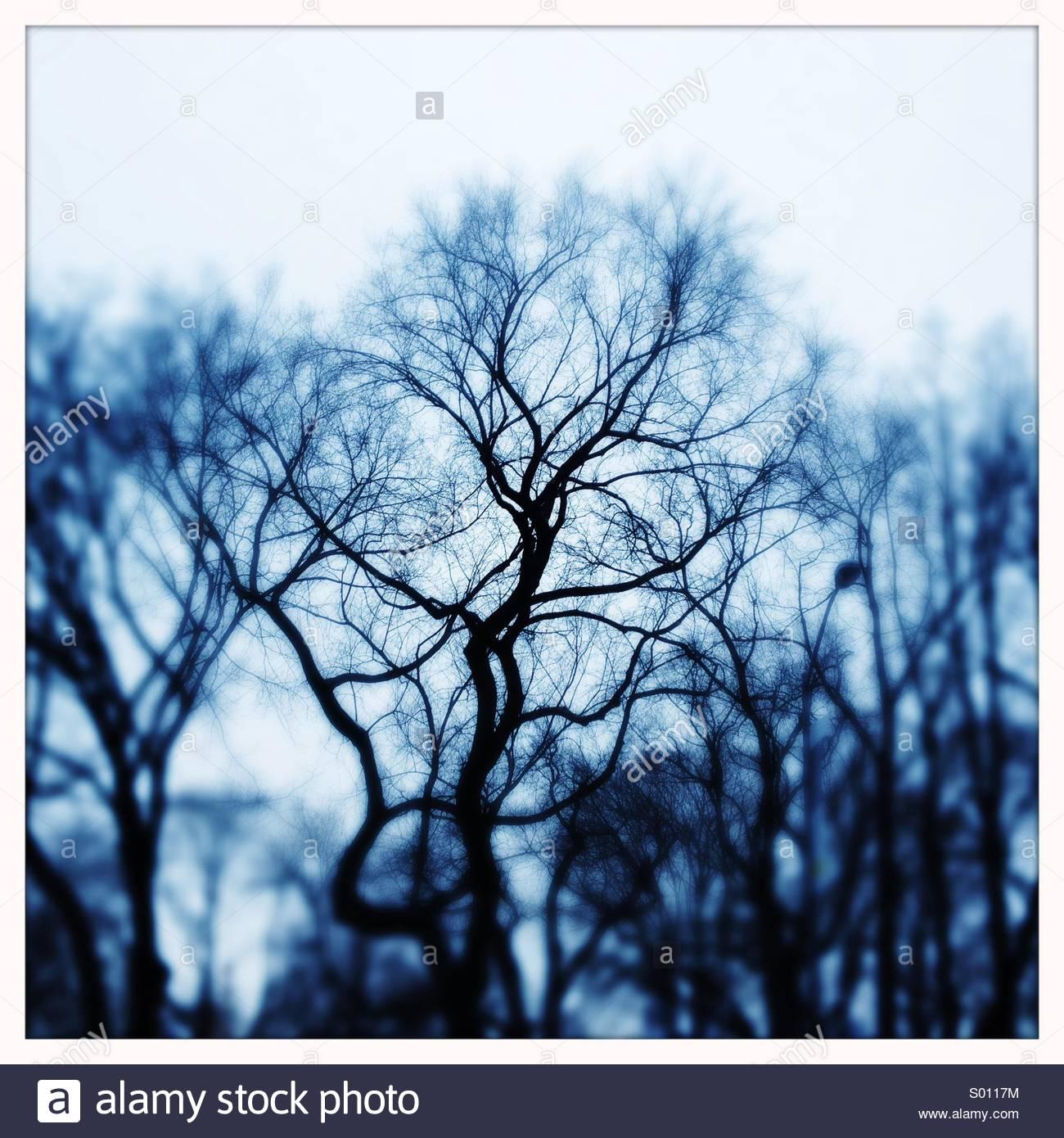 Arbres d'hiver nues Photo Stock