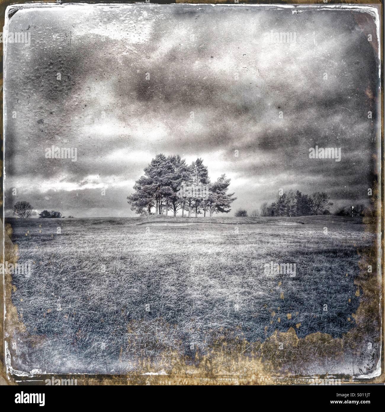Approche de l'orage sur woodland Photo Stock