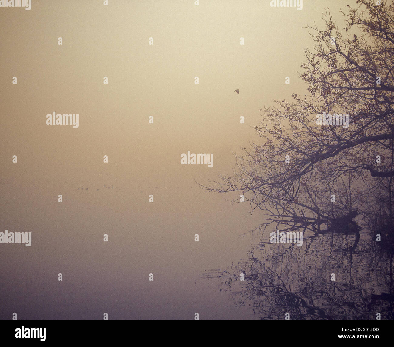 Matin brumeux sur le lac Photo Stock