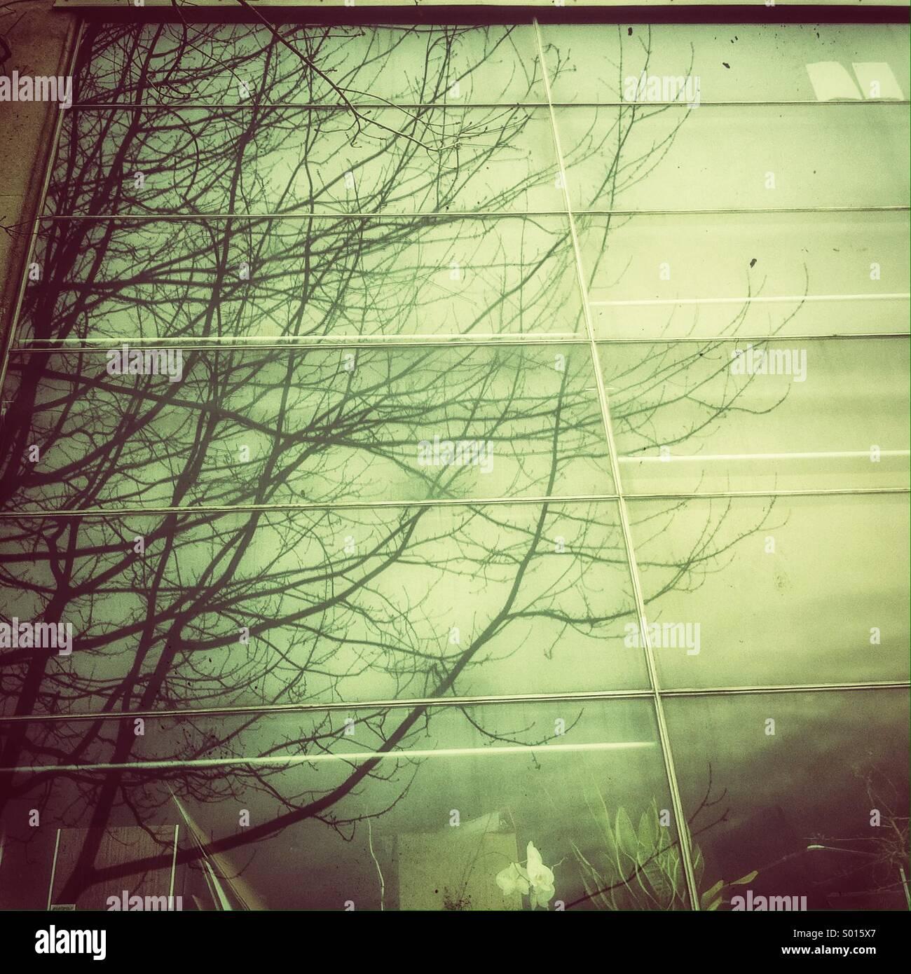 Reflet de branches nues dans une fenêtre de bureau sur une morne journée. Photo Stock
