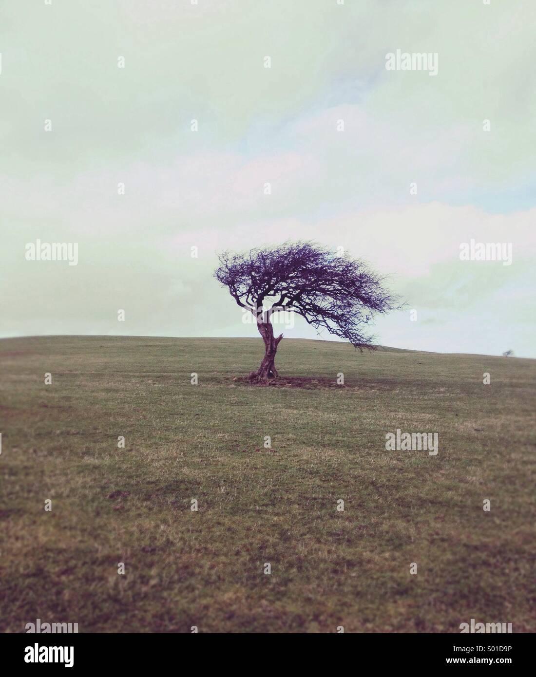 Un arbre balayé par Photo Stock