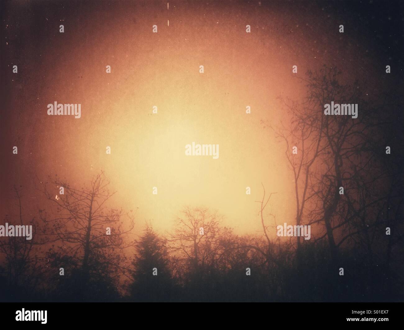 La silhouette des arbres avec effet grunge Photo Stock