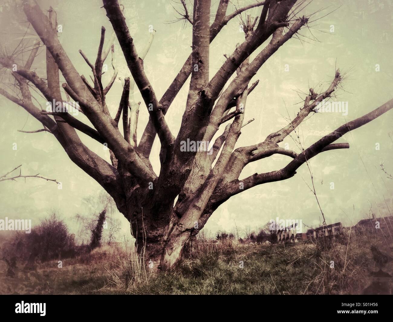 Spooky tree Photo Stock