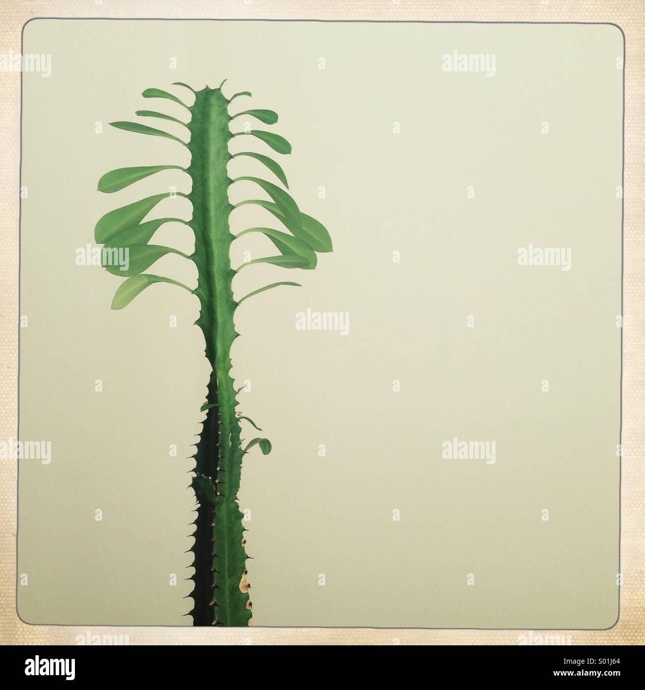 Feuilles de cactus à la maison Photo Stock