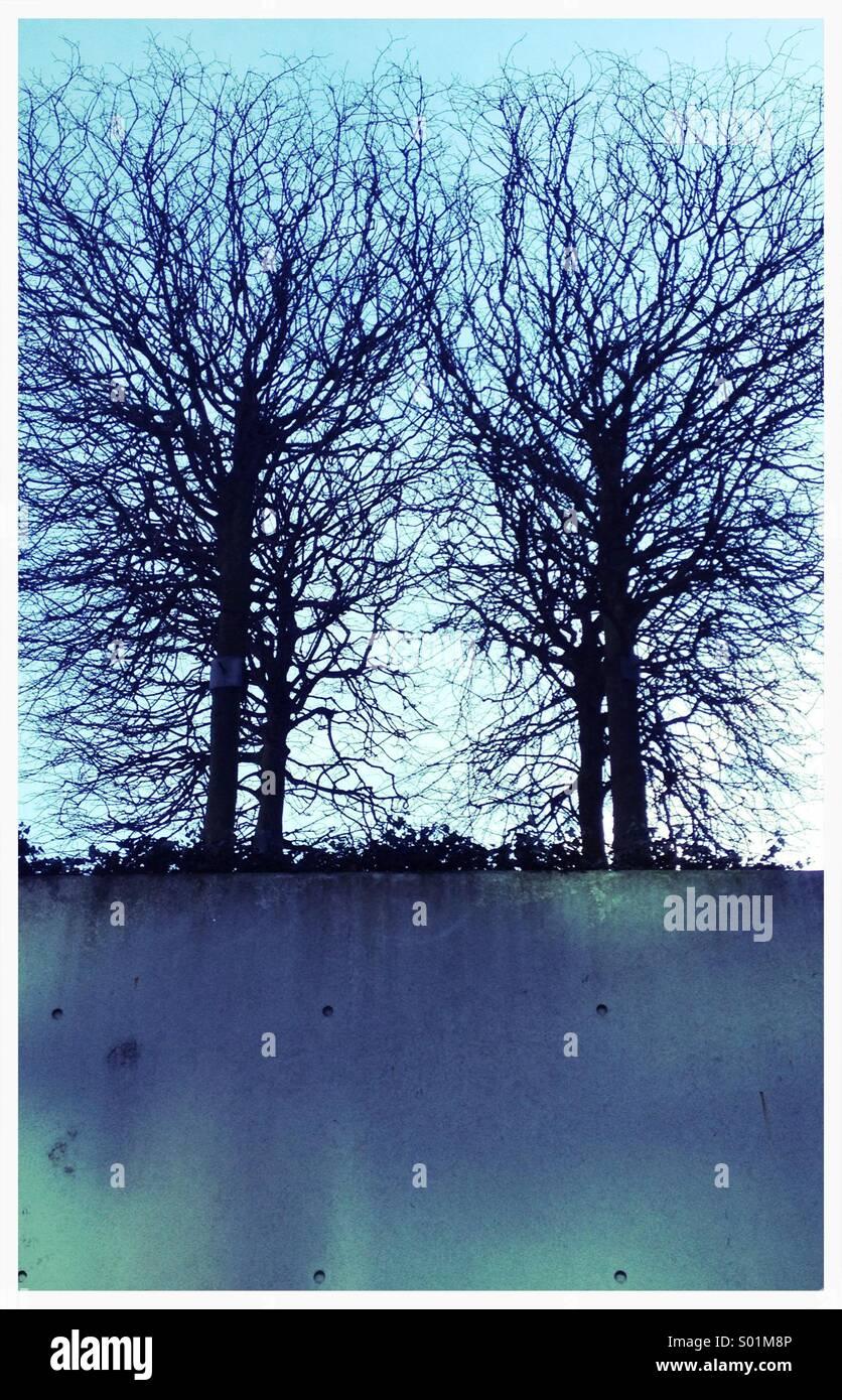 Deux arbres en hiver Photo Stock