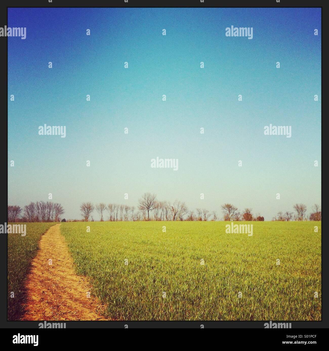 Chemin à travers un champ vert menant vers une ligne si les arbres à l'horizon avec ciel bleu clair Photo Stock
