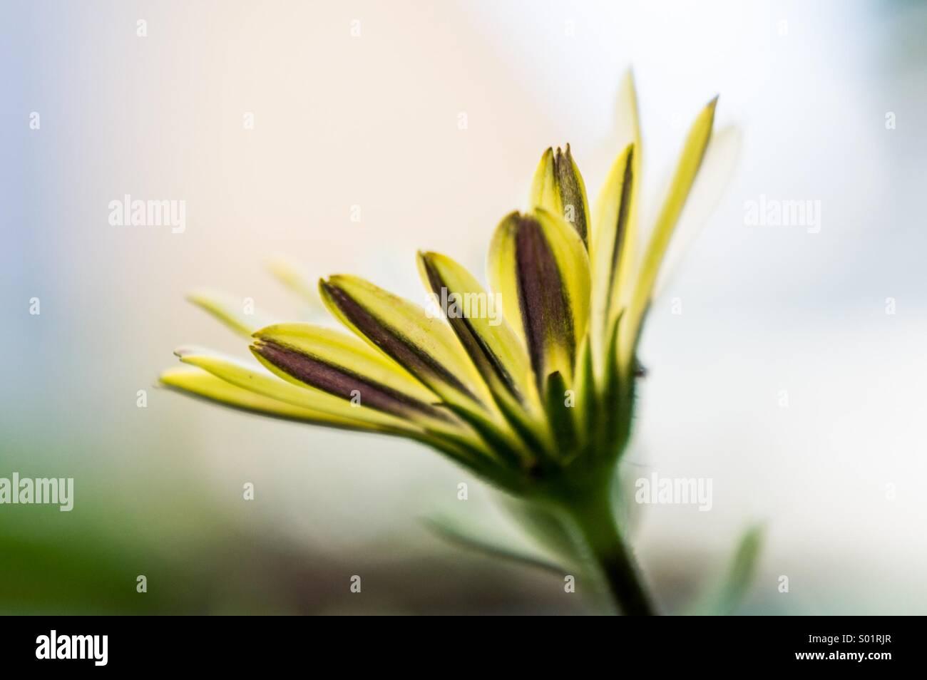 Fleur Banque D'Images