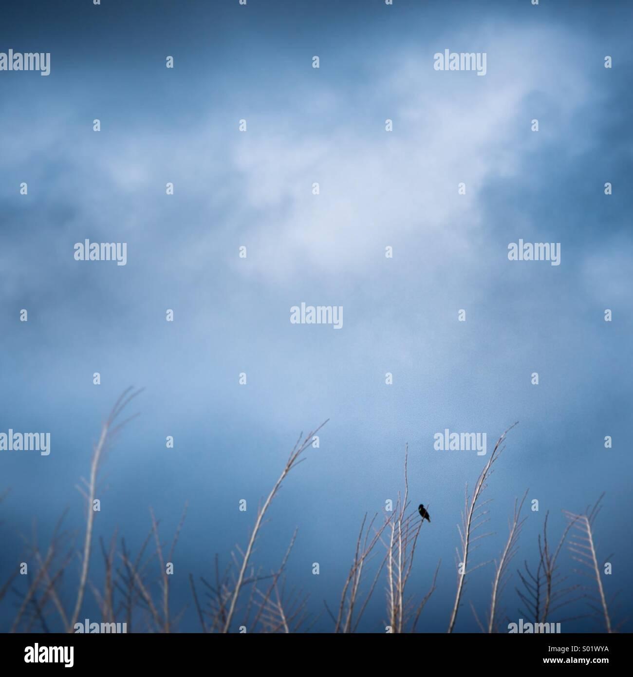 Un oiseau repose sur une branche d'arbre sous un ciel orageux. Photo Stock