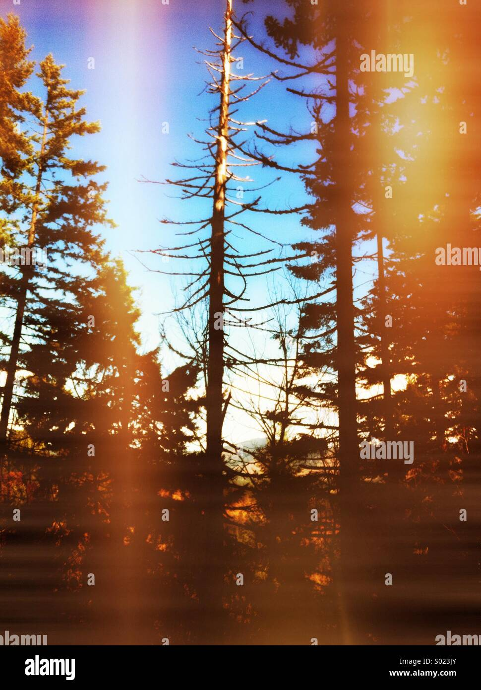 Arbre en bois Photo Stock