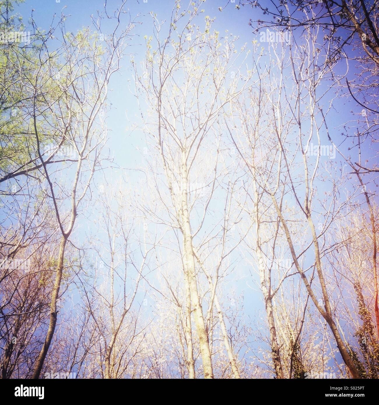 Les branches d'arbre nu Photo Stock