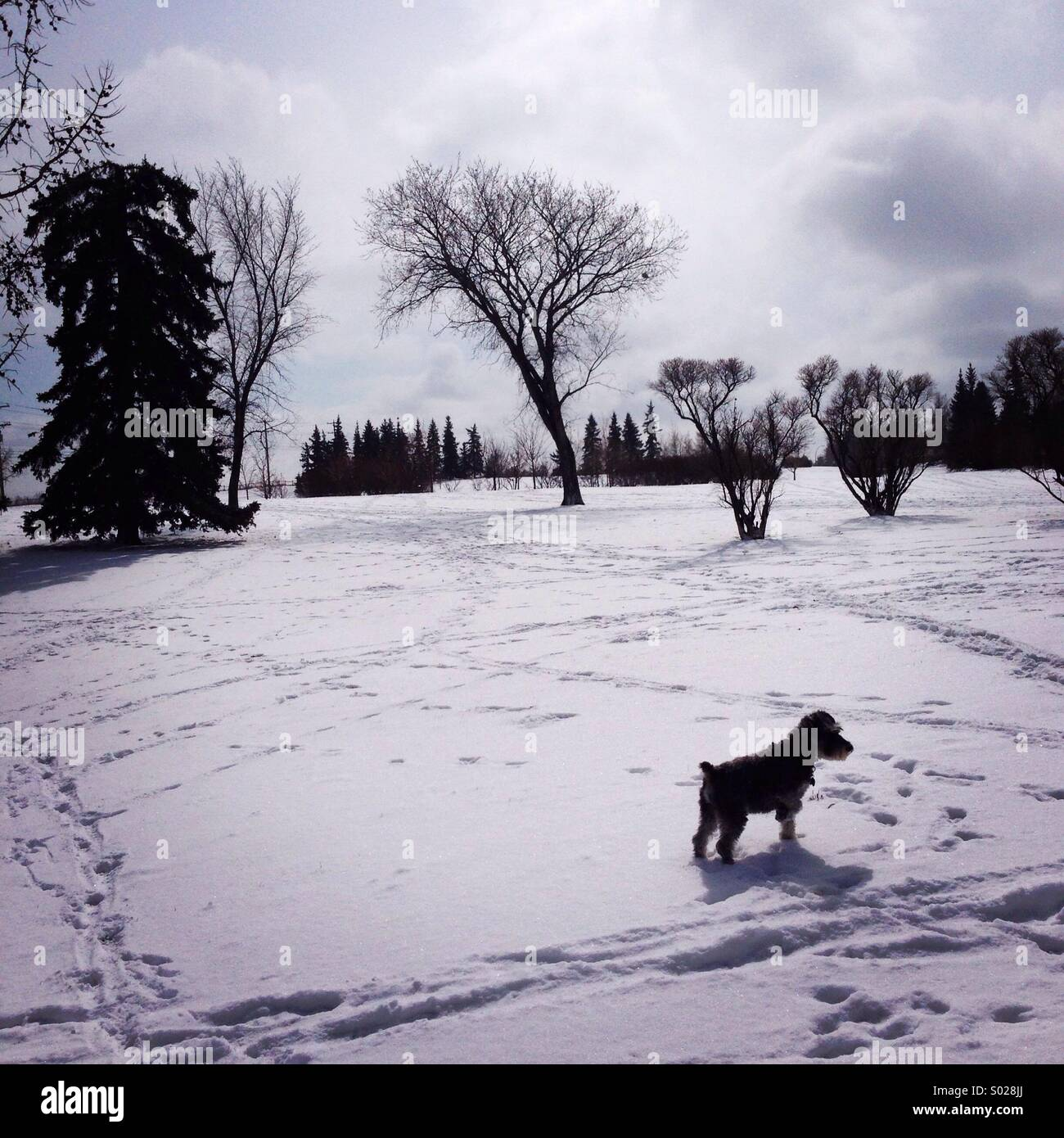 Promenade de chien Banque D'Images