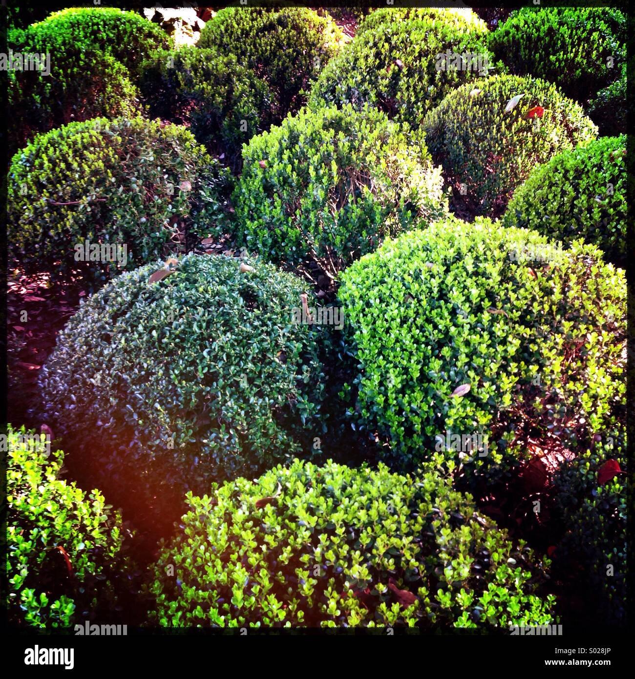 Arbres du jardin Photo Stock