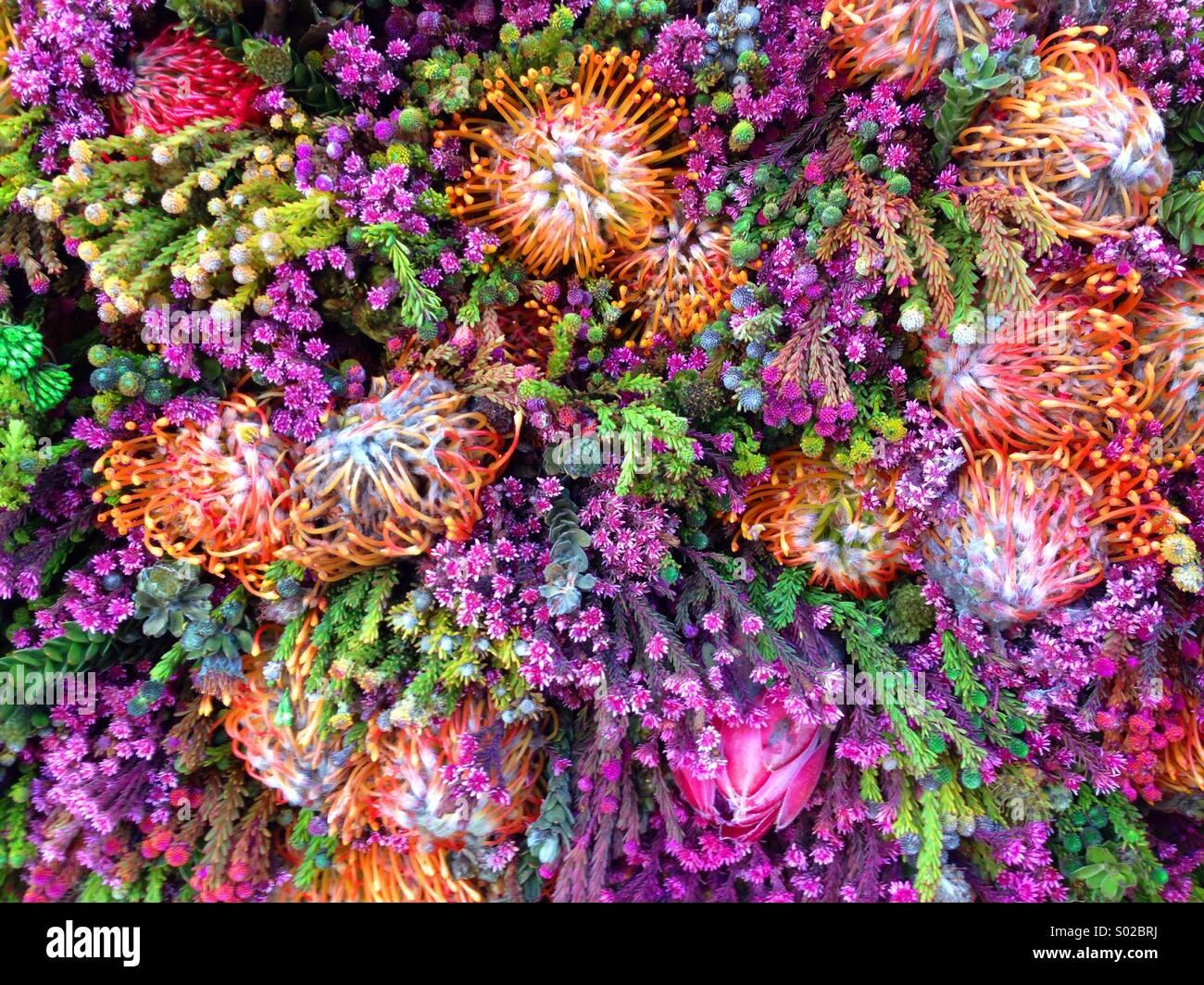 Des fleurs étranges dans Columbia Road Flower Market à Londres Photo Stock
