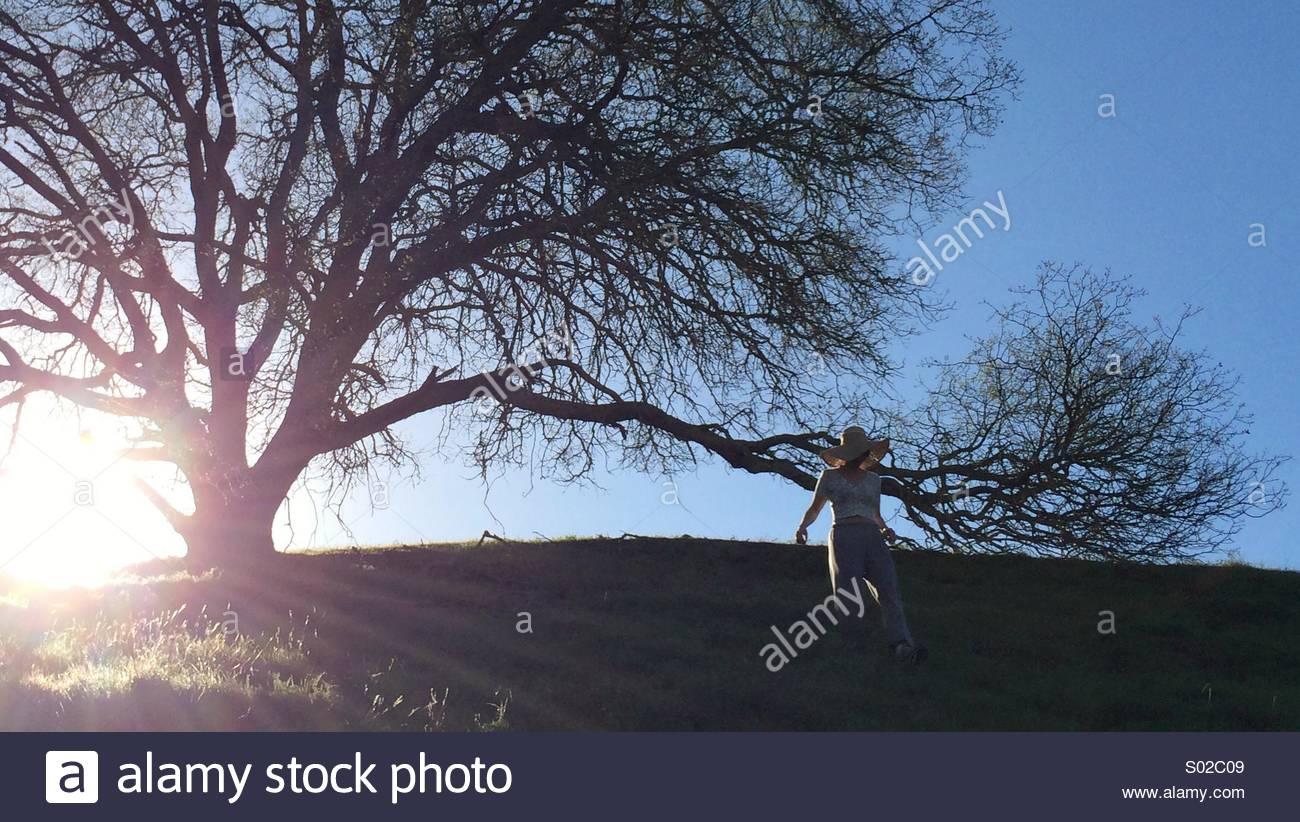 Femme par un arbre sur une colline Photo Stock