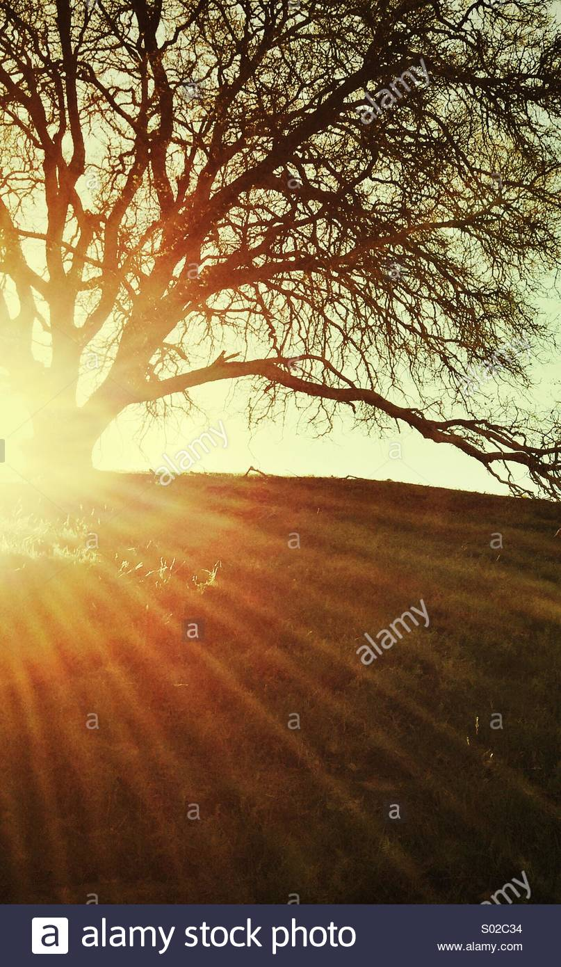 Arbre sur Hill et rayons de soleil Photo Stock