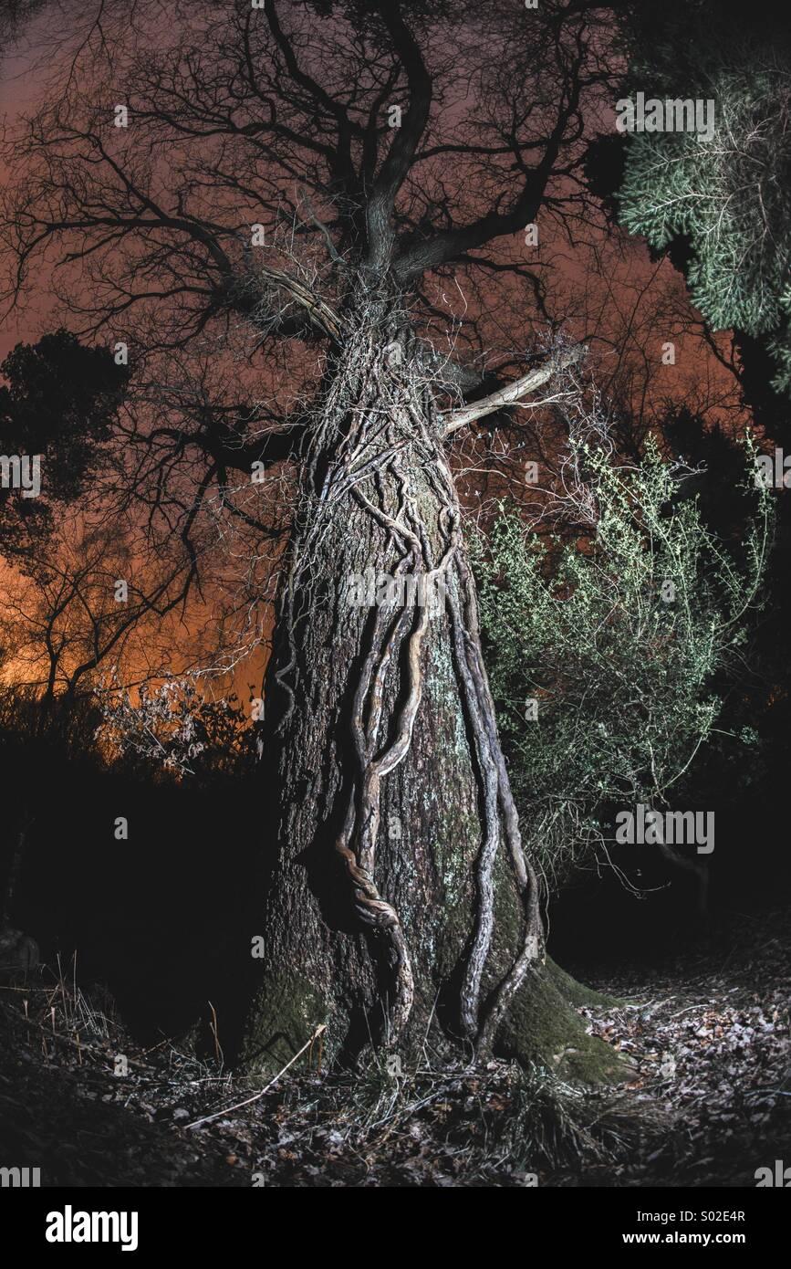 Forêt de la peur Photo Stock