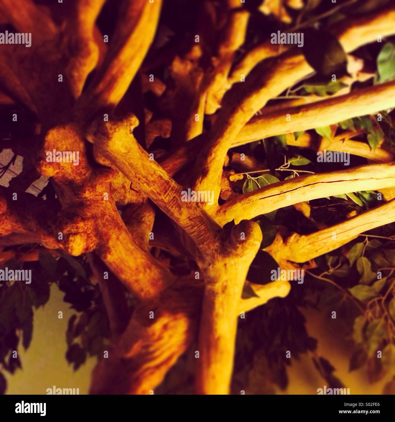 Ombre lumière arbre Photo Stock